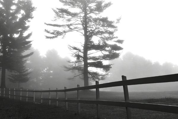Misty morning by djh698