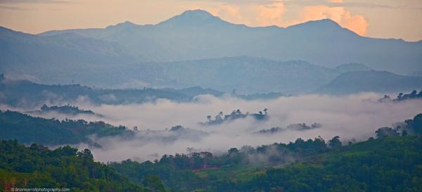Dawn mists over Sabah Tea Plantation, Sabah, Borneo by brian17302