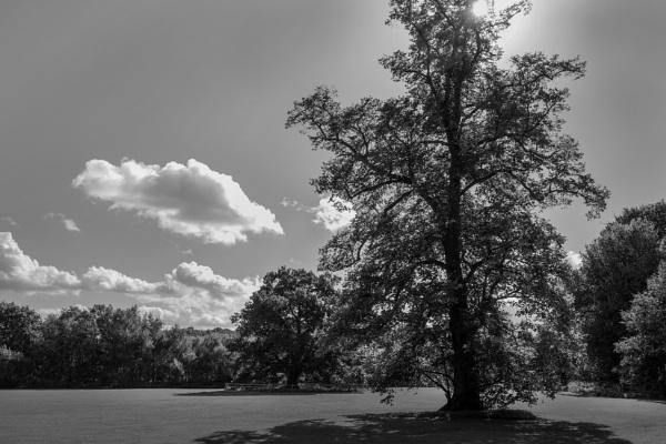 Contre Jour Tree by rickhanson