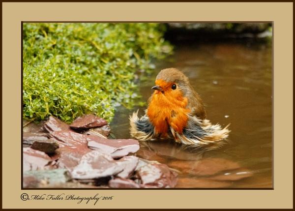 BATH TIME by ninpo135