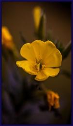 mood yellow