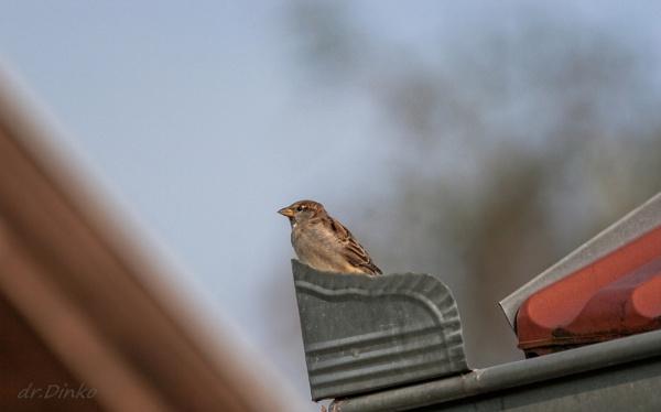 Sparrow 3.
