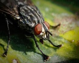 Photo : Fly