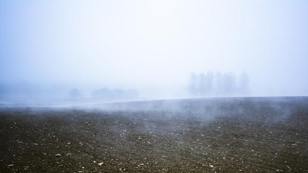 Fog and Field by gerainte1