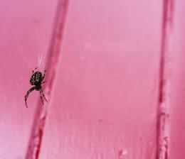 Spider and red door