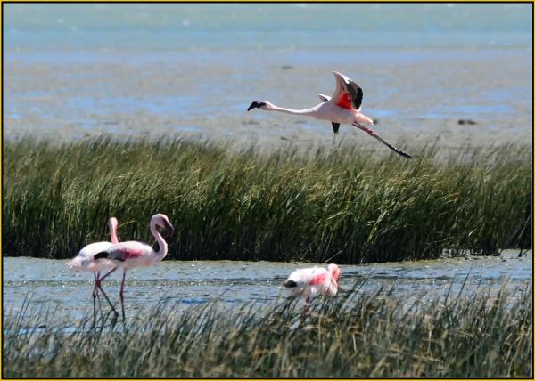 Flamingo flypast, by Moebee