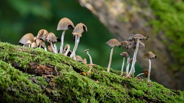 Fungi by dlm71