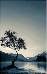 Llyn Padarn Tree...