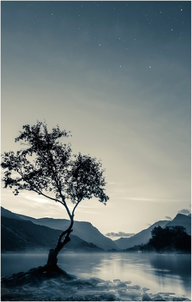 Llyn Padarn Tree... by Satlight