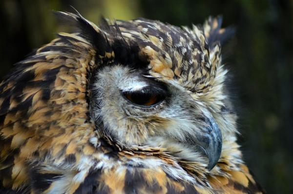 Owl by Stu74