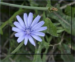 Botanical Miscellany
