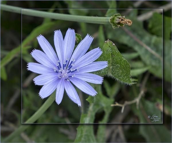Botanical Miscellany by LynneJoyce