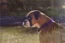 Farm Dog by Daisymaye