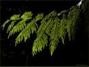 A Wet Branch by Daisymaye