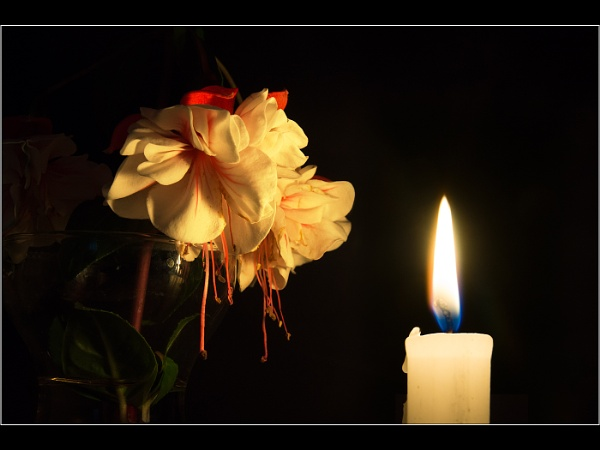 Candle lit Fuschia by Otinkyad