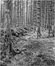 Trees by wynn469