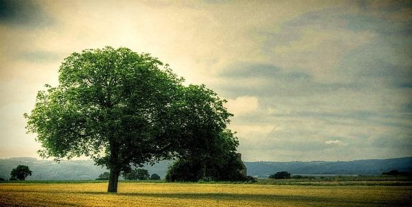 Tree. by NotLostinFrance