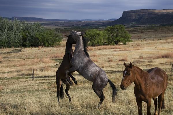 Horse Play by Msalicat