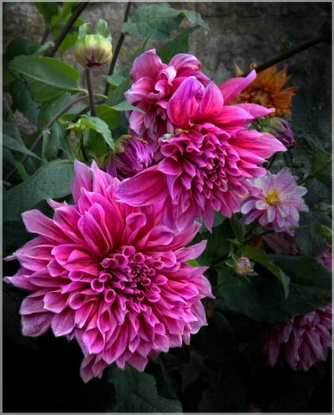 Still Blooming by sweetpea62