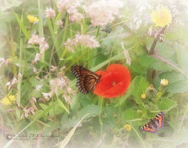 Pastil shades of summer. by colijohn