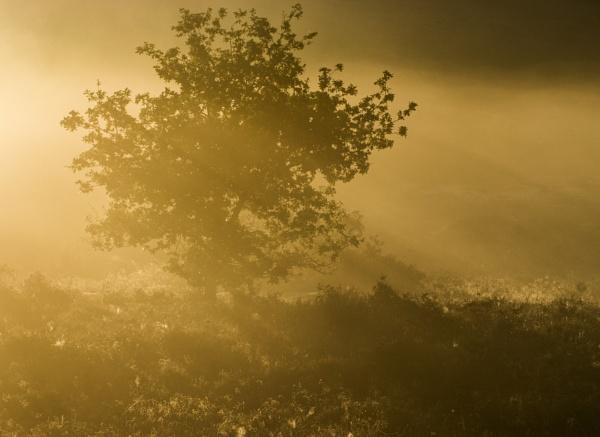Foggy Dawn by mommablue