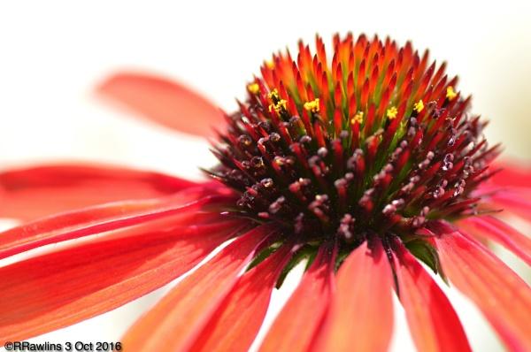 Red Star by Rhianna