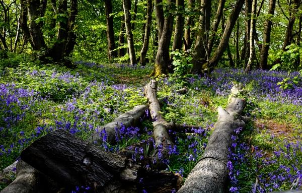 In the Woods by Nikonuser1