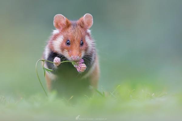 Snack by fotomat