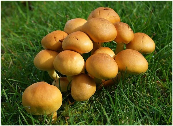Fungi Grouping by johnriley1uk