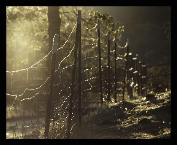Fence Web by cconstab