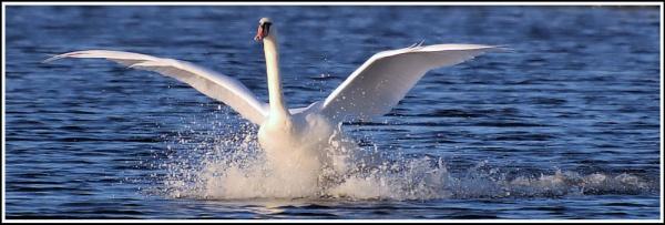Splash down by HelenMarie