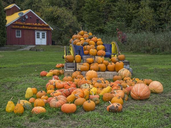 Pumpkin Patch by Leedslass1