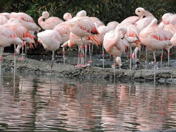 Pretty flamingoes by HerefordAnn