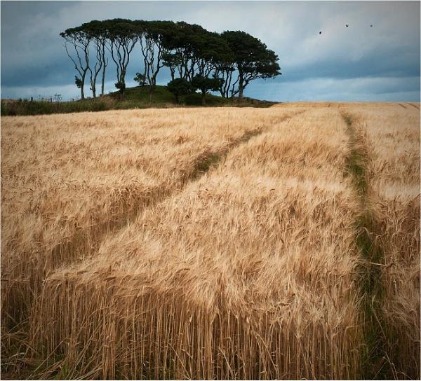 Crawton Copse by MalcolmM