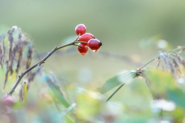 Autumn Tears by chris-p