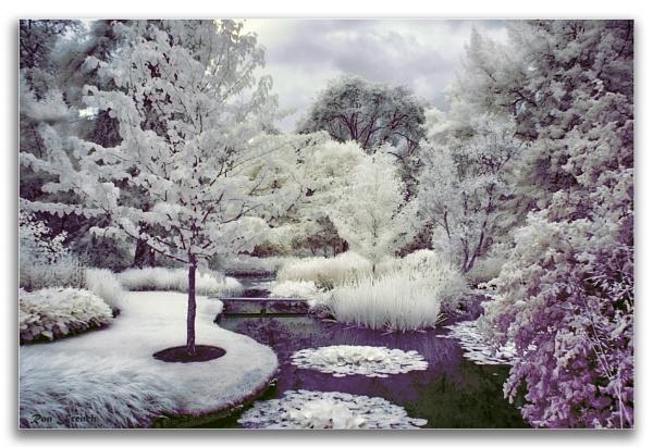 Longstock water gardens. IR by frenchie44
