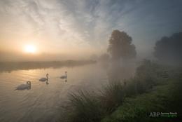 Stour Swans