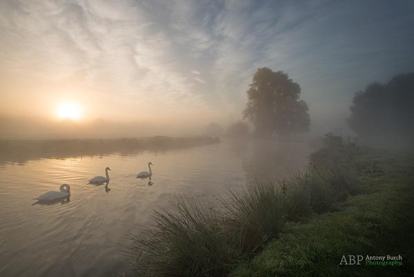 Stour Swans by AntonyB