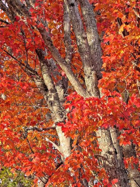 Autumn Glory by Joline