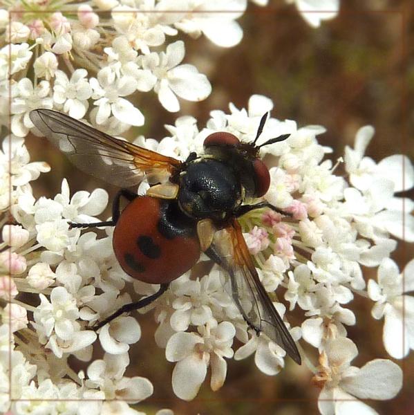 spotty fly by CarolG