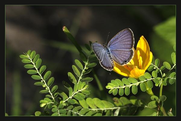 Pretty Blue by prabhusinha