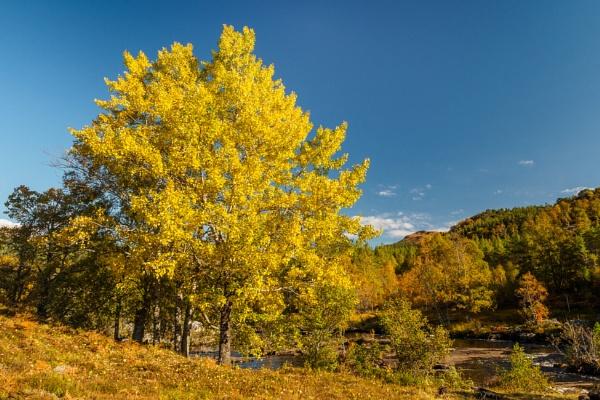 Sunshine on Leaf by iainmacd