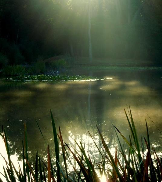 Spotlights by SUE118