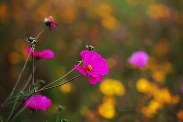 Bloom by Jat_Riski