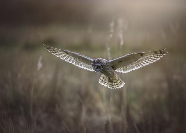 SEO by ianrobinson