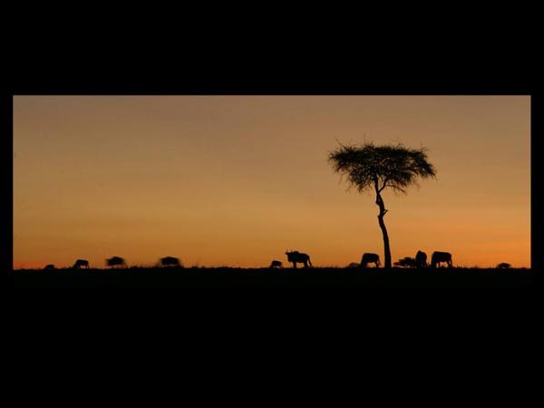 Kenyan evening by philhomer