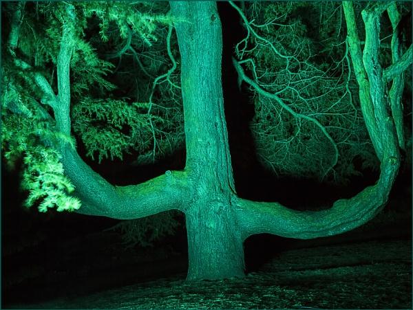 Botanical Lights by Irishkate