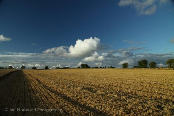 Harvest Time - Dramatic Field & Sky by horbie