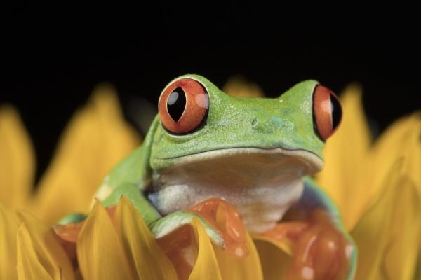 Peek-A-Boo!! by CanonAndy22