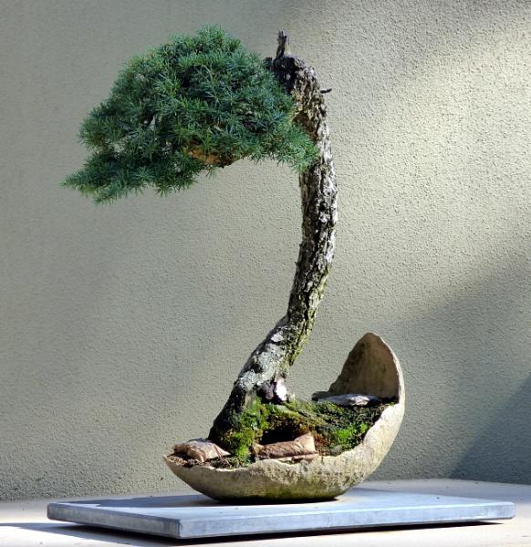 bonsai by emit1